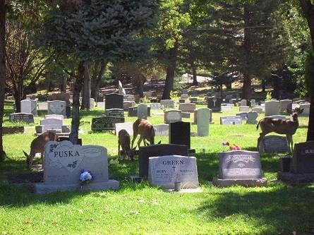 Deer visiting graves